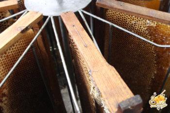 การสลัดน้ำผึ้งออกจากรวงผึ้ง น้ำผึ้งสุวรรณฟาร์ม