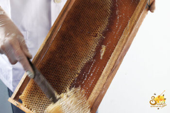 การปาดรวงผึ้ง น้ำผึ้งสุวรรณฟาร์ม