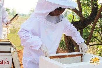 นำรวงผึ้งแพ็คใส่ลัง เพื่อไปสลัดน้ำผึ้ง