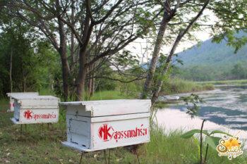 วางกล่องผึ้ง-น้ำผึ้งสุวรรณฟาร์ม