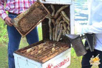 เปิดกล่อง พ่นควัน smoke น้ำผึ้งสุวรรณฟาร์ม