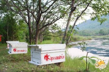 ฟาร์มผึ้ง-1