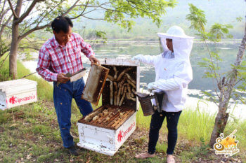 ฟาร์มผึ้ง-3