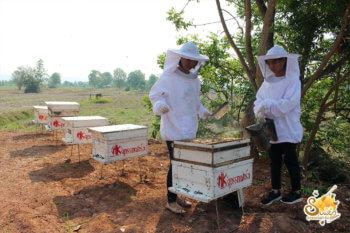 ฟาร์มผึ้ง-5
