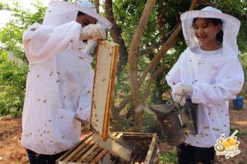 ฟาร์มผึ้ง-6