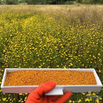 ขายส่ง เกสรผึ้งแท้ 100% ขนาด 1000 กก.