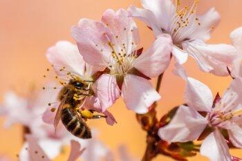น้ำผึ้งดอกลำไย น้ำผึ้งดอกไม้ป่า และ น้ำผึ้งดอกลิ้นจี่ต่างกันอย่างไร ?